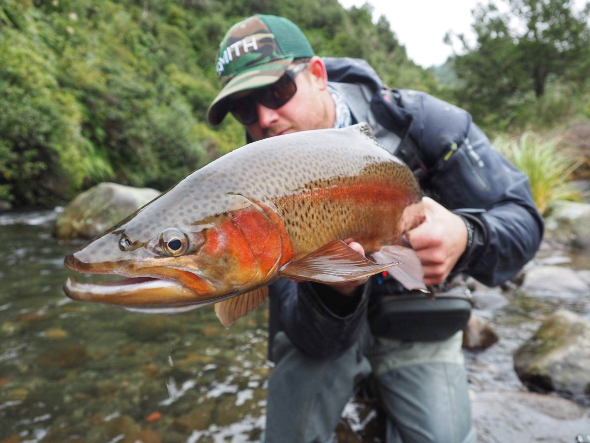 New Zealand fly fishing trips