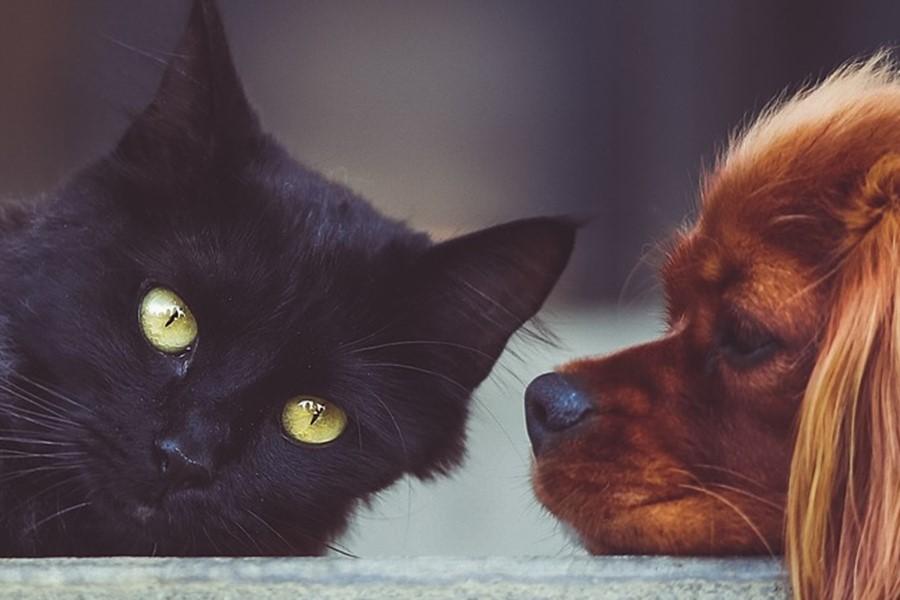 pet-lovers-gift-shop